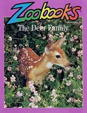 Zoobooks Magazine Cheap Discount Subscription